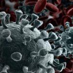 El programa informático que ha descubrió el coronavirus es el mismo que encontró el Zika